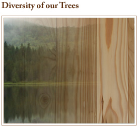 currier forest products unique pieces tree diversity